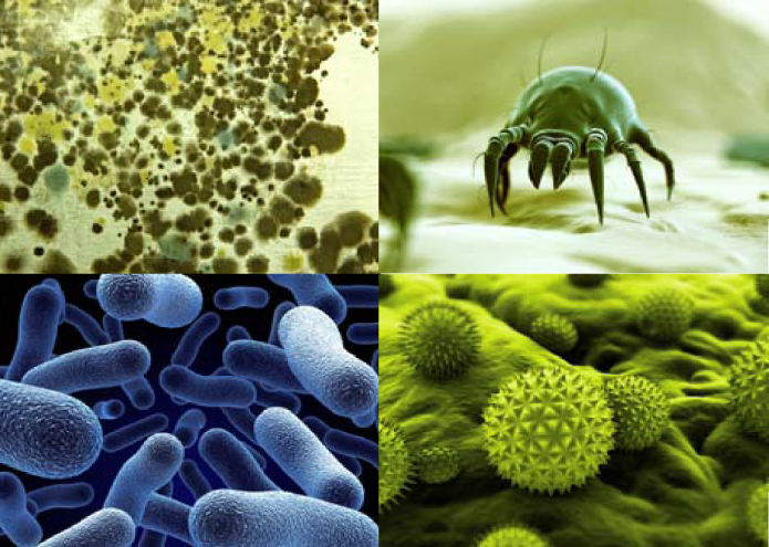 Dust mites, pollen, mold and bacteria